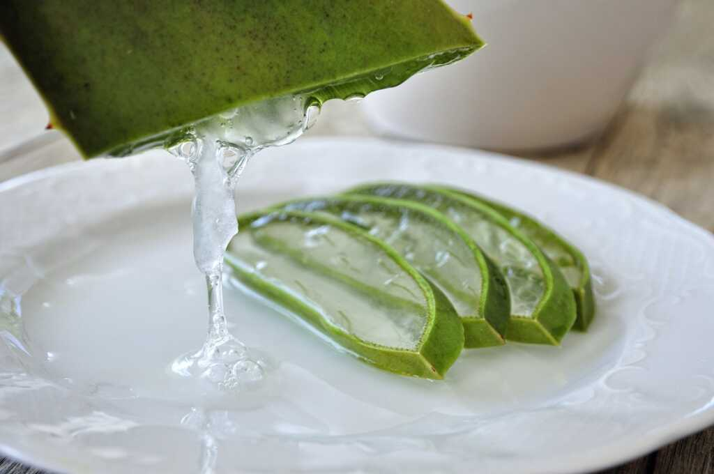 Aloe vera that can be used in hand sanitizer