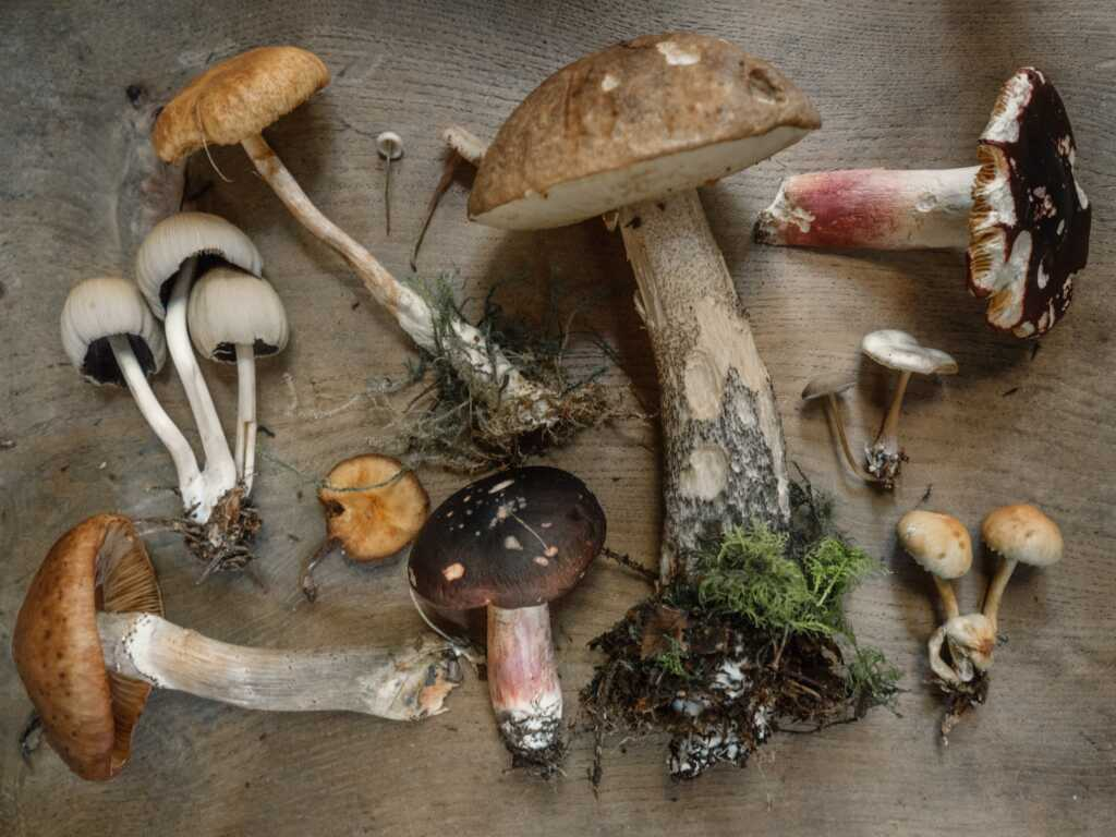 Mushrooms exposed to sunlight contain vitamin d