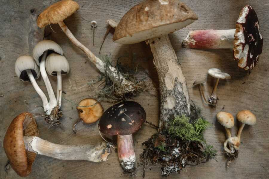 natural-mushrooms-exposed-to-UV-contain-vitamin-d
